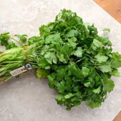 conservation de la coriandre - the best way to keep cilantro
