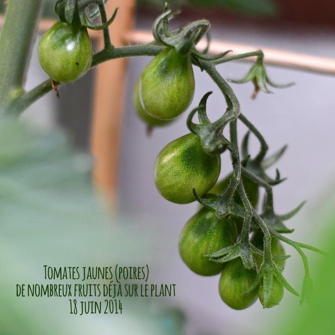 tomates poires juin